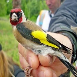 https://www.madrid.es/UnidadesDescentralizadas/Educacion_Ambiental/ContenidosBasicos/Actividades/HabitatVerano2018/ImagenesVerano/Itinerarios_ornitologicos.jpg
