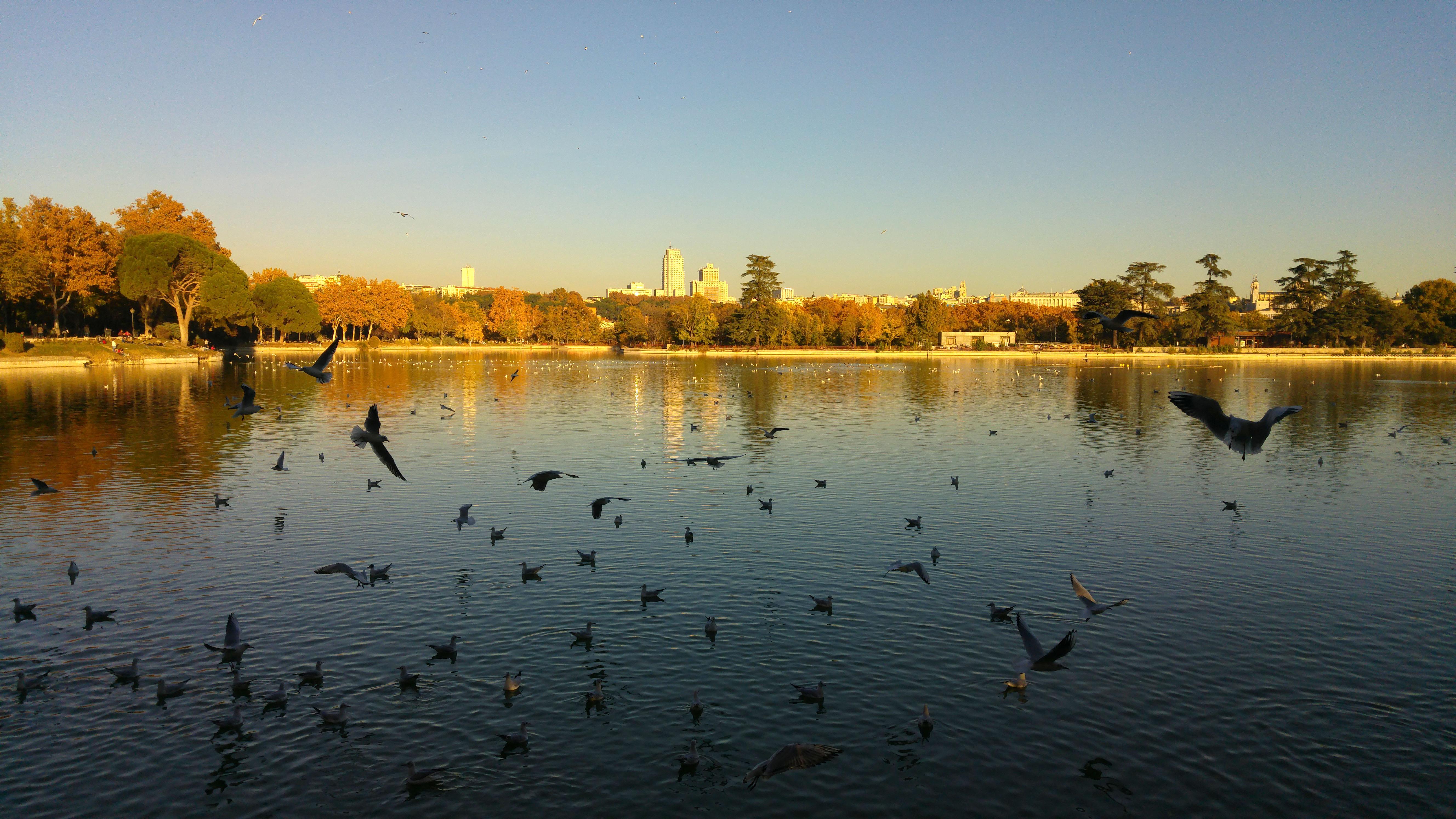 Comienzan las obras de rehabilitación del Lago de la Casa de Campo y ...